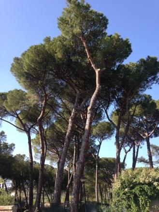 De natuur in de buitenwijken is slechts een voorproefje van de Toscaanse schoonheid