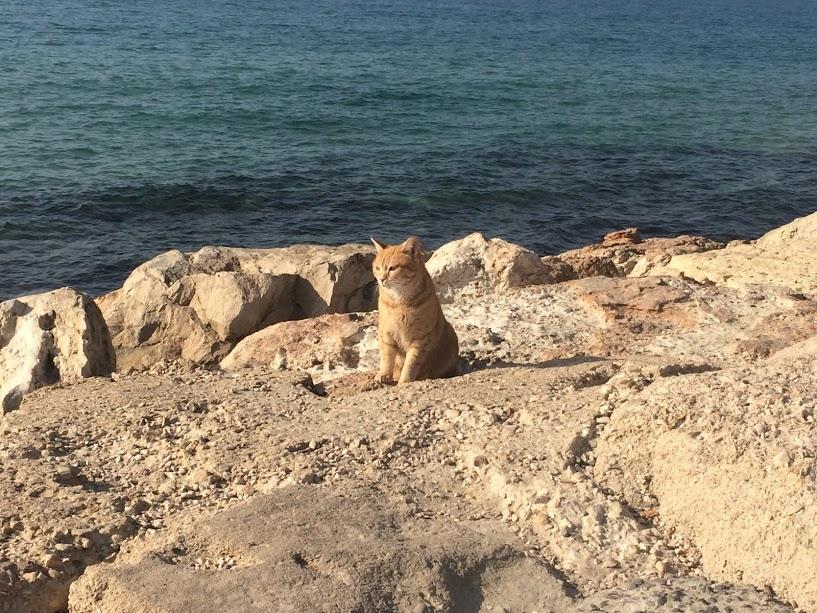Een mijmerend katje..