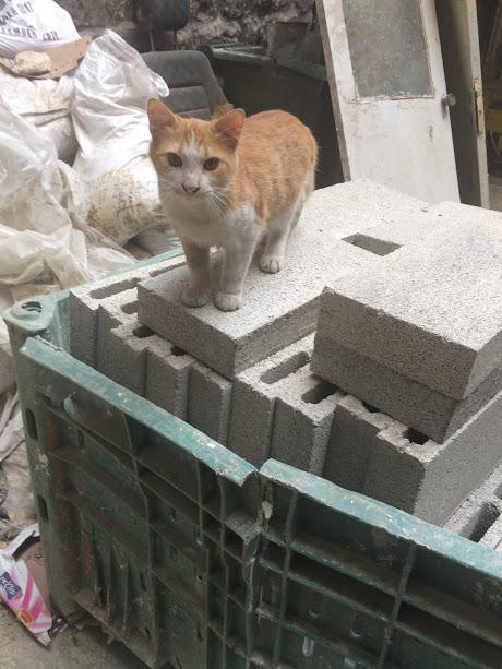 Nablus: katje houdt de wacht