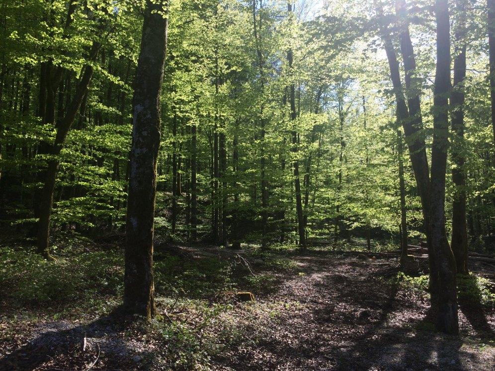 Het zonnetje worstelt zich door de bomen