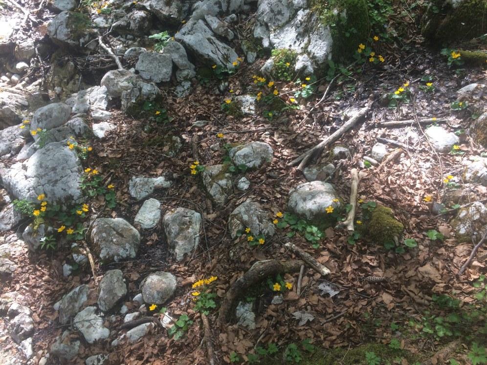 Vrolijke gele bloemetjes